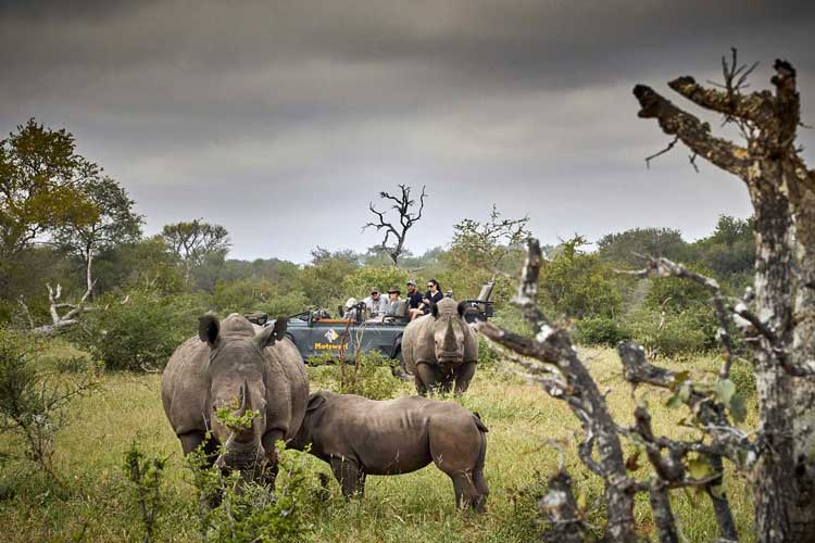 Game Drive - Rhino - Geiger's Camp