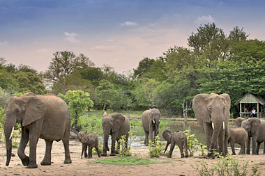 Elephant Herd waterhole Big 5 Timbavati Game Reserve Luxury South African Safari Tanda Tula Tented Safari Camp